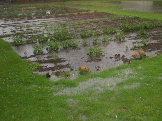 How to improve clay soil and poor garden drainage for Backyard flooding solutions