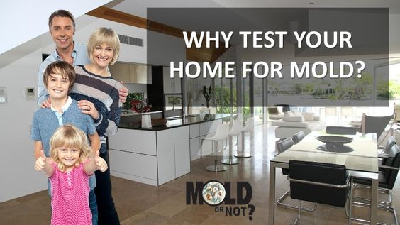 All you have to do is order a home mold test from Mold or Not and be well on your way. But why test for mold in the first place?