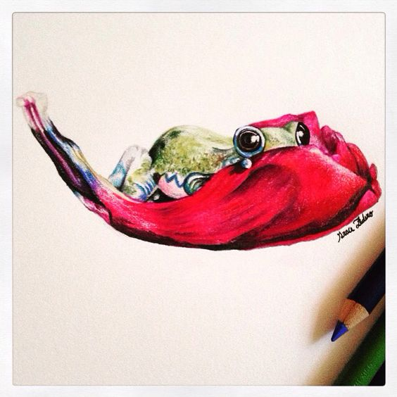Drawing some frogs.