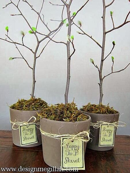 I love this idea for Tu B'Shevat!