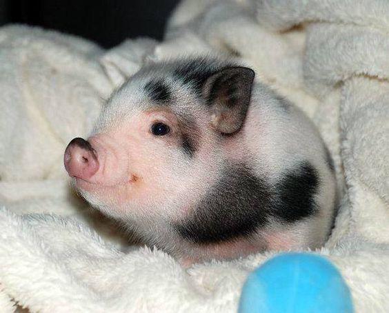 Piglet !!!!