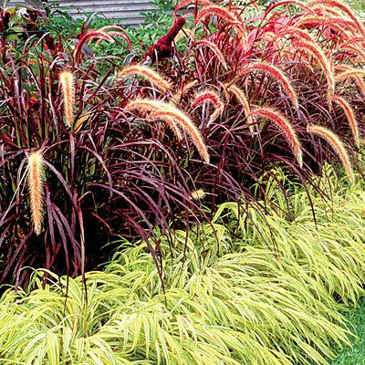 11 secrets to the easiest garden ever gardens decks and for Tall oriental grass