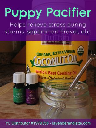 Natural remedy for dogs using essential oils to relieve stress/anxiety. 1.5 tsp coconut oil, 3 drops each lavender and Peace & Calming.