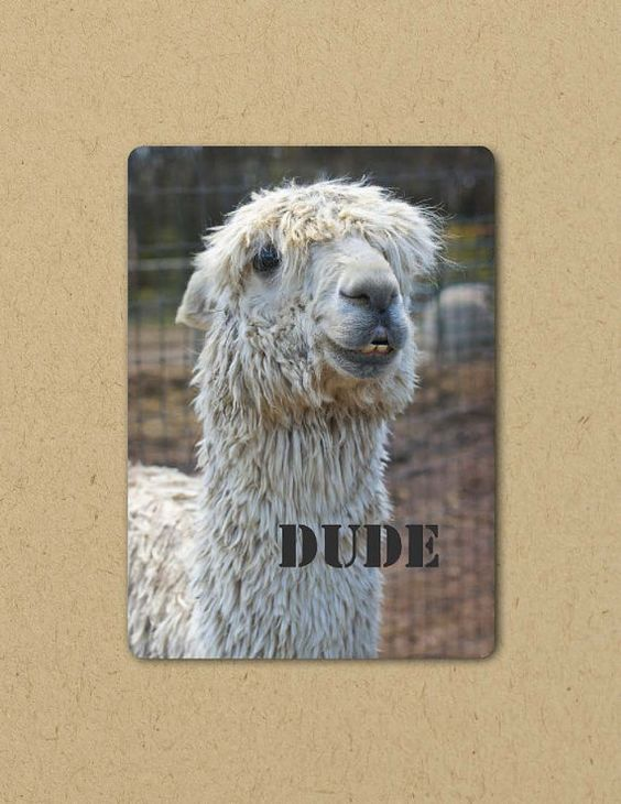 Photo Greeting  Card ALPACA DUDE Eco by FarmFreshPhotography, $4.25