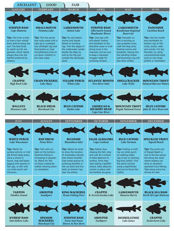 Pinterest the world s catalog of ideas for Saltwater fish chart