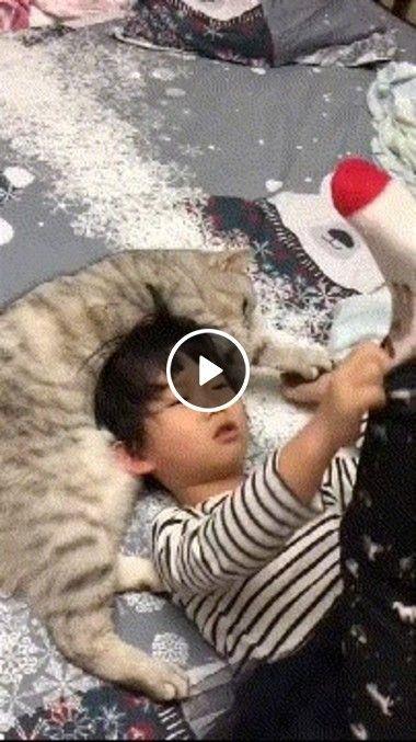 Os gatinhos adoram brincar com  crianças