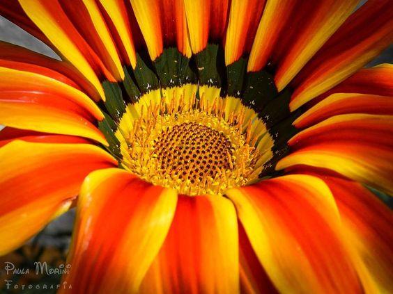 Los colores que impactan los sentidos Fotografía profesional #photoshoot #photocontest #nikon #nikonistas #flores #naranja #amarillo @nikonistas @nikonworld_ @nikon_owners @nikon_landscape @nikontop #nikontop #follow4follow #likeforlike #followme #seguime #love #cute #theuniquephotography #p3top #ig_naturelovers #ig_argentina #primerolacomunidad #buenosaires #argentina #lomasdelmirador…