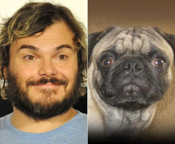 Celebrity animal look-a-like: Jack Black + a Pug? NY Daily News