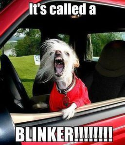 It's called a BLINKER!!! - No kidding, this is me any time I drive anywhere, do people NOT know blinkers exist??? angry dog driving road rage