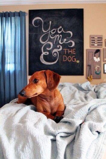 You, Me, & the Dog.