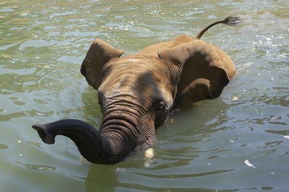 Down periscope | by San Diego Zoo Global