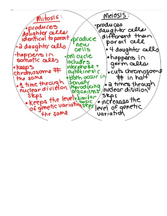 27 Comparing and Contrasting Mitosis and Meiosisdoc – Comparing Mitosis and Meiosis Worksheet