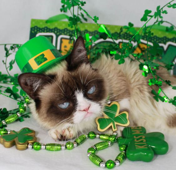 St Patricks Grumpy