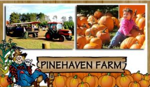 pinehaven farm | 15 for 4-Pack Admission to Pinehaven Farm Pumpkin Patch and Harvest ...
