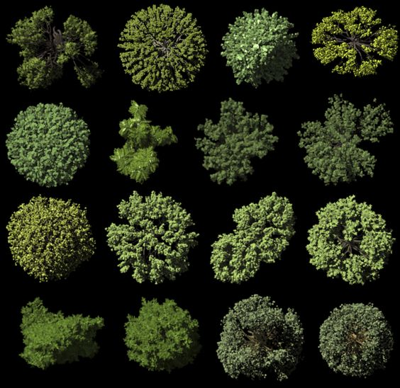 Realistic Trees Top View Trees Top View Tree Photoshop Landscaping Around Trees
