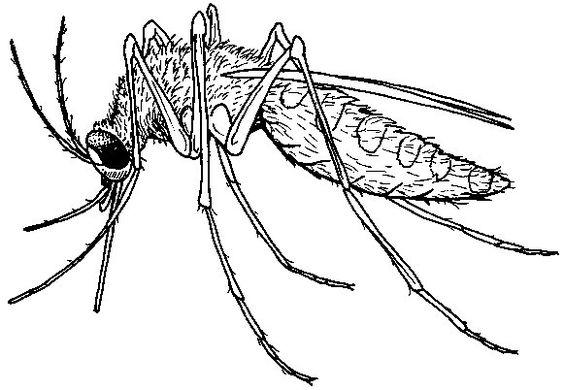 Bug Off You Nasty Buggers!!  Bug Spray!!