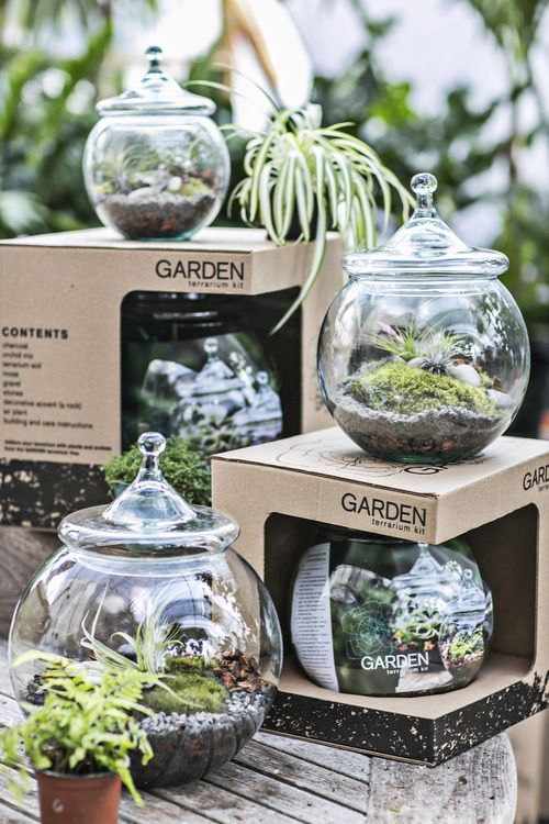 Outdoors Made Fashionable Indoors - New Terrarium Kits Available at GARDEN