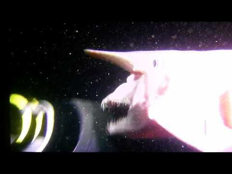 The Goblin Shark, Disturbing One of a Kind Footage -- shades of the xenomorphs of Alien!...Love it!!