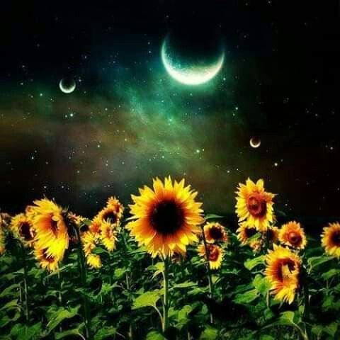 Pin By Loratafoya On Sunflower Madness Sunflower Pictures Moon Flower Sunflower Wallpaper