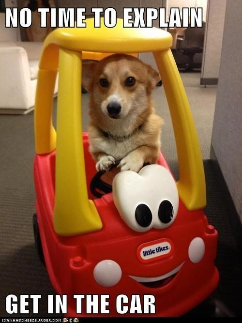 Get In The Car #car #dogmemes #dogmeme: