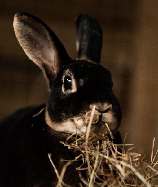 Rolo And Caramel Pets For Adoption Animal Shelter Animals Pet Adoption