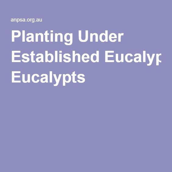 Planting Under Established Eucalypts