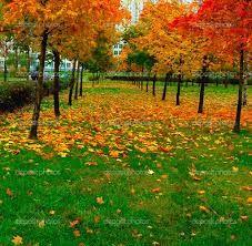 Resultado de imagem para autumn PARK