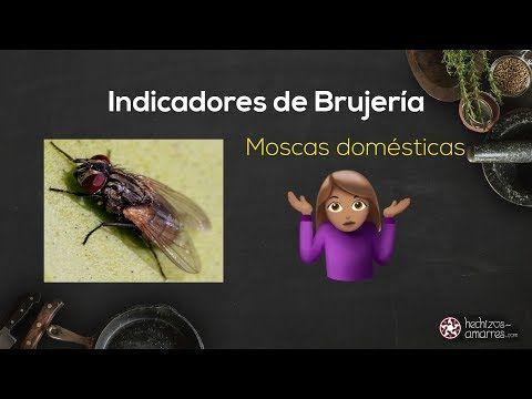 Insectos Señales De Brujería En La Casa Moscas Chinches Y Otras Plagas Youtube Plaga De Moscas Brujeria Chinches