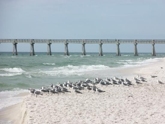 Navarre Beach Hotels Enter Thru The Shark S Mouth Picture Of Florida Panhandle