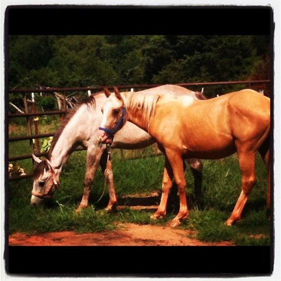 Our horses @ 2G Ranch