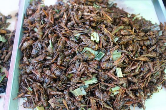 something I wouldn't dare try...fried crickets (Thailand)