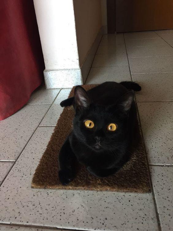Super Cute Black Cat Chillin Cutecat Cat Blackcat Cute Black