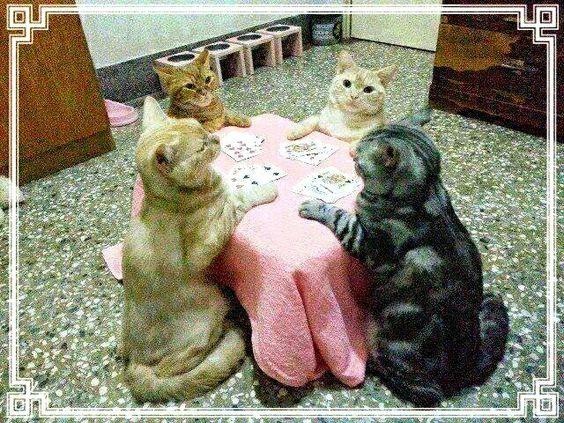 Jogo de cartas para descontrair...