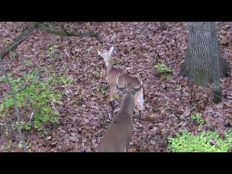 Pike County Il Whitetail Buck And Montana Decoy Youtube In 2020 Montana Decoy Whitetail Bucks Pike County