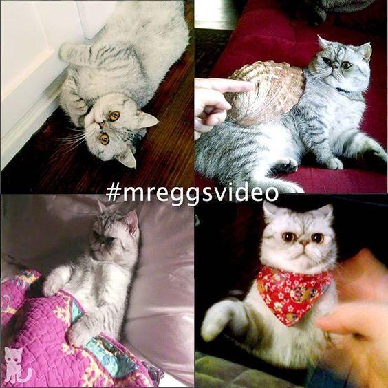 Lose Yourself in #mreggsvideo