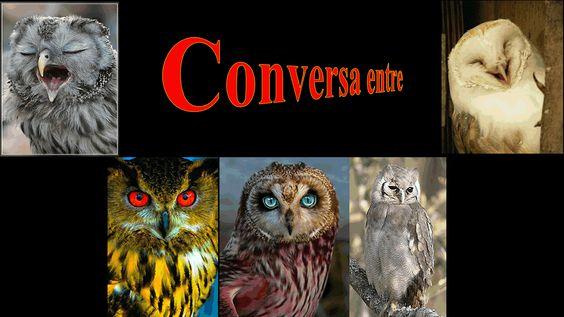 O que será... será...  que estas corujas tanto discutem  entre si!... O que será... será?...