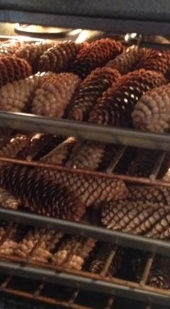 how to clean pine cones from outside