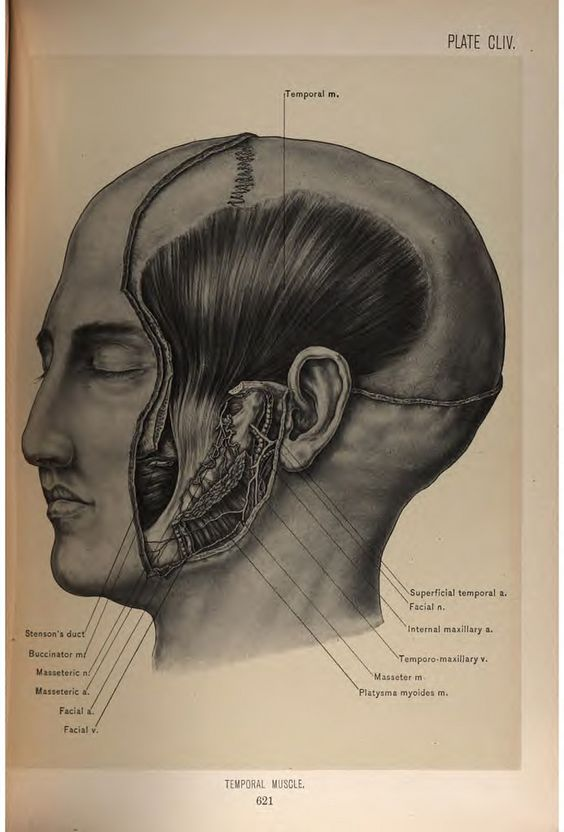 https://flic.kr/p/wqFKgZ | Surgical Anatomy of the Head and Neck ...