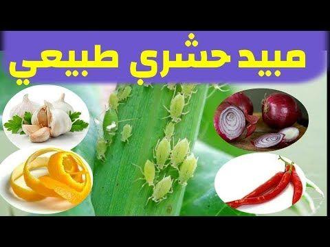 مبيد حشري طبيعي منزلي ضد المن و الحشرات فعال و آمن Youtube Planting Herbs Plants Herbs