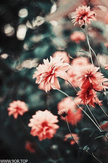 رمزيات ورود انستقرام صور ورود تجنن Dark Grey Background Vintage Flowers Flowers Photography