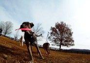 Um dia no parque do ponto de vista de um cachorro