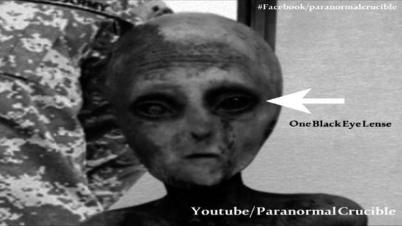Ufo Evidence: Alien Capturado Vivo no Novo México