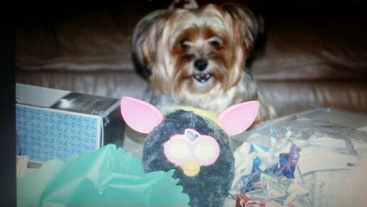 Furbaby with a Furby