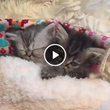 Gatinhos com frio dividi a cama