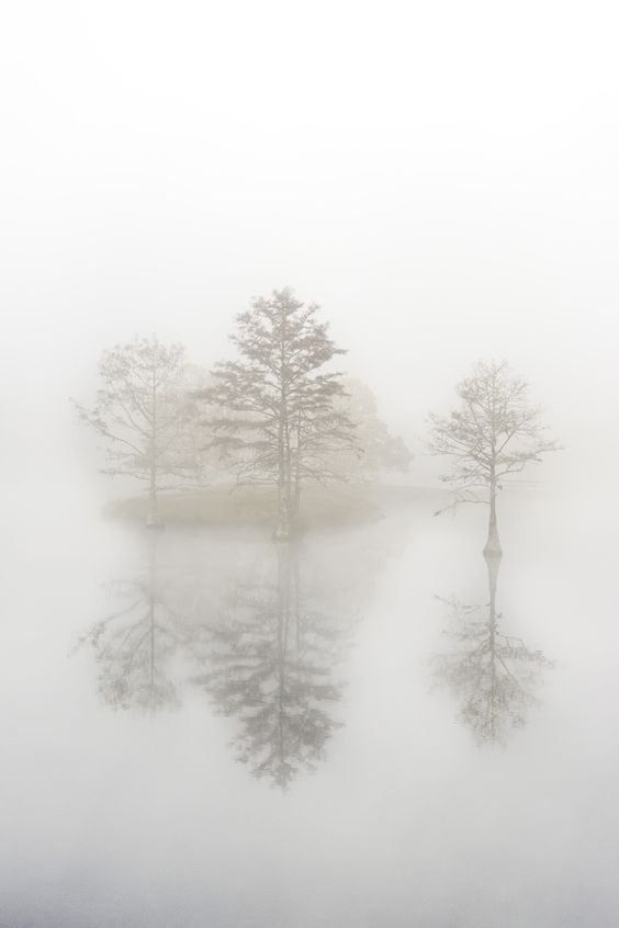 Trees stand in a river wrapped in fog - Beaver's Bend State Park, Broken Bow, Oklahoma.