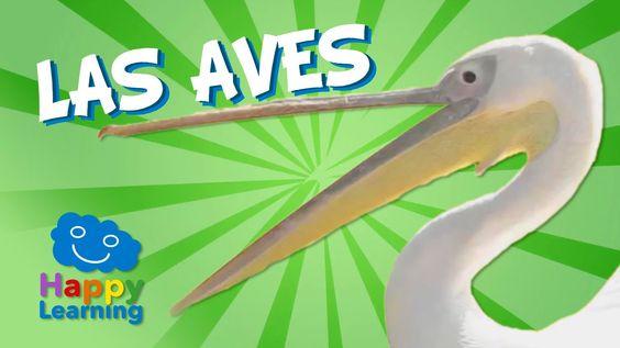 Las Aves | Videos Educativos para Niños