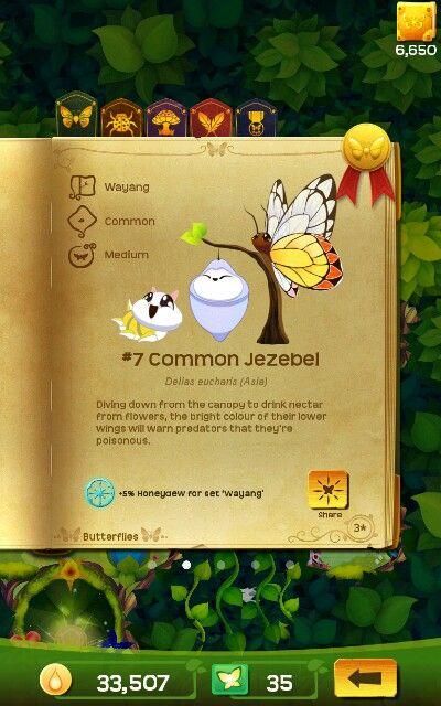 Common Jazebel