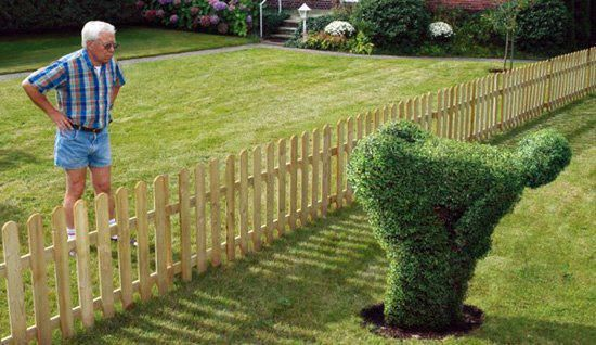 This is not Disney landscaping I just love it how to throw it out there...lolololololololololol Too bad I didn't think of this when I had assholes for neighbors.