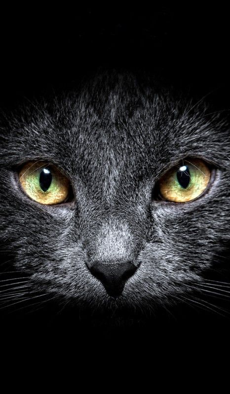 """""""....look into my eyes.... You are not getting sleepy.... You will pin all night...."""" ("""""""") ("""""""")"""