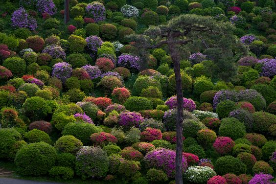 Among Trees and Flowers in Tokyo by Tak Iwayoshi
